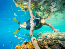 Κολυμπήστε με αναπνευτήρα κολυμπά στα ρηχά νερά με τα ψάρια κοραλλιών, Ερυθρά Θάλασσα, Αίγυπτος Στοκ Εικόνα