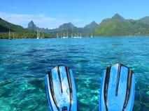 Κολυμπήστε με αναπνευτήρα σε Moorea Στοκ Φωτογραφίες