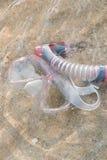 κολυμπήστε με αναπνευτήρα Στοκ εικόνα με δικαίωμα ελεύθερης χρήσης