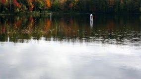Κολυμπήστε τους σημαντήρες στη λίμνη Norton, Μαίην απόθεμα βίντεο