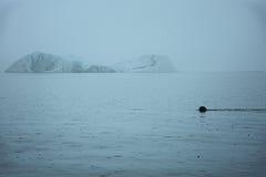 Κολυμπώντας θαλασσόλυκος μπροστά από το παγόβουνο στοκ φωτογραφίες με δικαίωμα ελεύθερης χρήσης