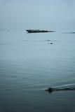 Κολυμπώντας θαλασσόλυκος στοκ εικόνες