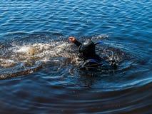 Κολυμπώντας δύτης Στοκ Φωτογραφίες