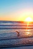 Κολυμπώντας seagull Στοκ φωτογραφία με δικαίωμα ελεύθερης χρήσης