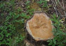 Κολόβωμα δέντρων με τη φυσική πρασινάδα Στοκ εικόνες με δικαίωμα ελεύθερης χρήσης