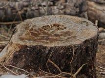 Κολόβωμα δέντρων στα βουνά στοκ φωτογραφίες με δικαίωμα ελεύθερης χρήσης