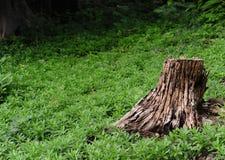 Κολόβωμα δέντρων στο δάσος Στοκ φωτογραφία με δικαίωμα ελεύθερης χρήσης