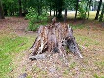 Κολόβωμα δέντρων στο πάρκο μάχης Στοκ Εικόνα