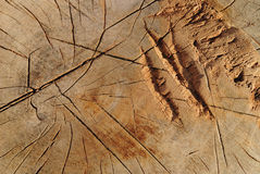 Κολόβωμα δέντρων Στοκ φωτογραφία με δικαίωμα ελεύθερης χρήσης