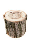 Κολόβωμα δέντρων Στοκ εικόνες με δικαίωμα ελεύθερης χρήσης