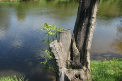 Κολόβωμα από τον ποταμό Στοκ εικόνα με δικαίωμα ελεύθερης χρήσης