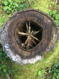 Κολόβωμα με το πράσινο βρύο και τρύπα στο κέντρο στοκ φωτογραφίες με δικαίωμα ελεύθερης χρήσης