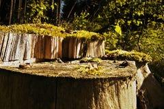 Κολόβωμα στα ξύλα επάνω από το χωριό Brezova στην ανατολή στην τσεχική φύση Στοκ Εικόνες