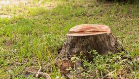 Κολόβωμα στην πράσινη χλόη στον κήπο παλαιό δέντρο κολοβωμάτω& Στοκ Εικόνες