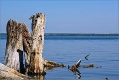 Κολόβωμα στη λίμνη Sugoyak Στοκ Φωτογραφία