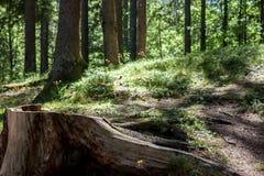 Κολόβωμα στο δάσος Στοκ Εικόνες