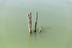 Κολόβωμα στο νερό, ύφος της Ταϊλάνδης Στοκ εικόνες με δικαίωμα ελεύθερης χρήσης