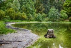 Κολόβωμα στο νερό Στοκ φωτογραφία με δικαίωμα ελεύθερης χρήσης
