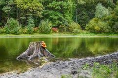 Κολόβωμα στο νερό Στοκ εικόνες με δικαίωμα ελεύθερης χρήσης