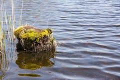 Κολόβωμα στο νερό Στοκ Φωτογραφία