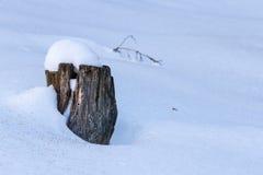 Κολόβωμα στο χιόνι Στοκ φωτογραφία με δικαίωμα ελεύθερης χρήσης