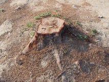 Κολόβωμα του δέντρου Στοκ Εικόνες