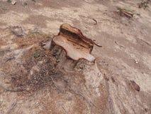 Κολόβωμα του δέντρου Στοκ φωτογραφία με δικαίωμα ελεύθερης χρήσης