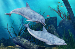 Κολύμβηση δελφινιών Στοκ εικόνες με δικαίωμα ελεύθερης χρήσης