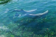 Κολύμβηση δελφινιών στοκ φωτογραφίες