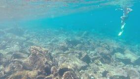 Κολύμβηση λιονταριών θάλασσας υποβρύχια Galapagos απόθεμα βίντεο