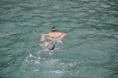 Κολύμβηση με αναπνευστήρα Στοκ εικόνα με δικαίωμα ελεύθερης χρήσης