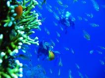 Κολύμβηση με το Fishies Στοκ εικόνες με δικαίωμα ελεύθερης χρήσης