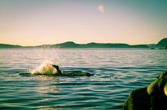 Κολύμβηση στον ωκεανό Στοκ φωτογραφία με δικαίωμα ελεύθερης χρήσης