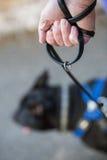 Κράτημα ενός μολύβδου σκυλιών. Στοκ Φωτογραφία