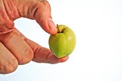 Κράτημα της Apple Στοκ Φωτογραφίες
