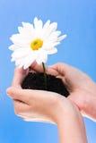 κράτημα χεριών λουλουδ&iota Στοκ φωτογραφίες με δικαίωμα ελεύθερης χρήσης