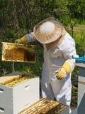 Κράτηση μελισσών Στοκ φωτογραφίες με δικαίωμα ελεύθερης χρήσης