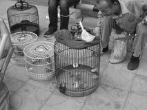 Κράτηση του ατόμου πουλιών Στοκ φωτογραφία με δικαίωμα ελεύθερης χρήσης