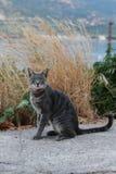 Κρήτη γάτα κοντά στη θάλασσα Φωτογραφία διακοπών Στοκ εικόνα με δικαίωμα ελεύθερης χρήσης