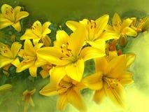 κρίνοι κίτρινοι Στοκ εικόνες με δικαίωμα ελεύθερης χρήσης