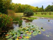 Κρίνοι νερού στη λίμνη, τα ανθίζοντας τριαντάφυλλα και το μπαμπού Στοκ Φωτογραφίες
