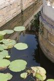 Κρίνοι στο νερό Στοκ Εικόνες