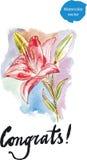 Κρίνοι Watercolor Στοκ εικόνα με δικαίωμα ελεύθερης χρήσης