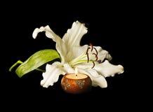 κρίνος κεριών Στοκ εικόνα με δικαίωμα ελεύθερης χρήσης