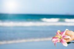 κρίνος λουλουδιών Στοκ Εικόνες
