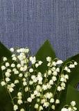 Κρίνος λουλουδιών της κοιλάδας σε ένα υπόβαθρο τζιν λεπτομερές ανασκόπηση floral διάνυσμα σχεδίων convolvulus σύνθεσης ανασκόπηση Στοκ Φωτογραφία