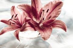 κρίνος ρομαντικός Στοκ εικόνα με δικαίωμα ελεύθερης χρήσης