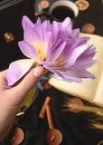 Κρίνος σε ένα χέρι Στοκ εικόνες με δικαίωμα ελεύθερης χρήσης
