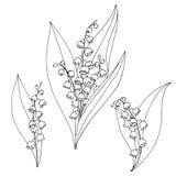 Κρίνος της γραφικής μαύρης απομονωμένης λευκό απεικόνισης σκίτσων λουλουδιών κοιλάδων Στοκ Φωτογραφία
