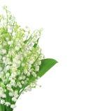 Κρίνος της κοιλάδας που απομονώνεται στο λευκό Στοκ φωτογραφία με δικαίωμα ελεύθερης χρήσης